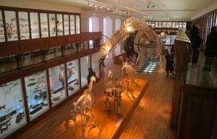 museum histoire naturelle nantes